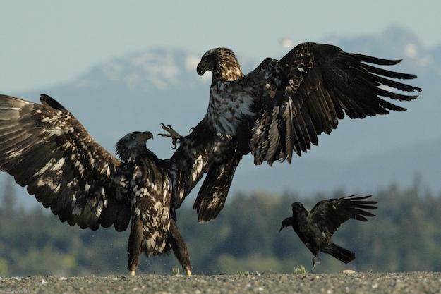 Rencontre fpv a l'aigle